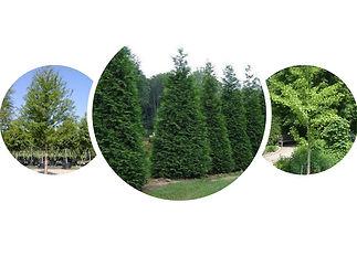 top trees cropped.jpg