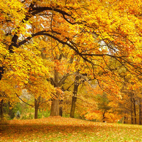 5 Myths About The Changing Fall Colors, Busted