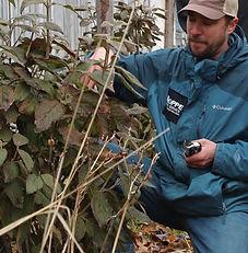 August pruning cropped 3.jpg