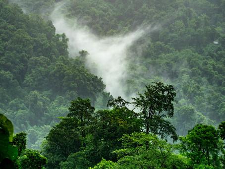 La forêt amazonienne brûle... Que puis-je faire?
