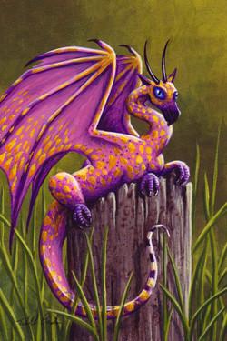 Spotted Dragonette