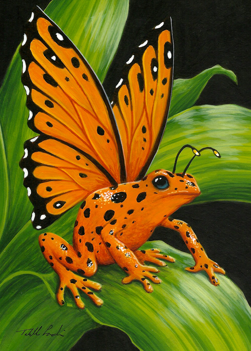 Orange Poison Fairy Frog