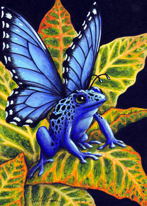 Blue Poison Fairy Frog