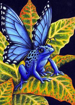 Blue Poison Fairy Frog
