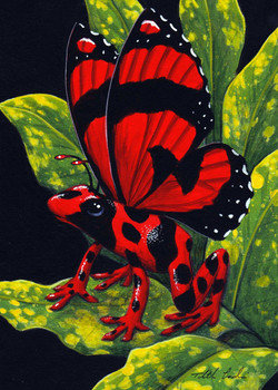 Red Poison Fairy Frog