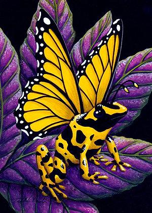 Yellow Poison Fairy Frog