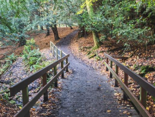 A wee walk in Rouken Glen.