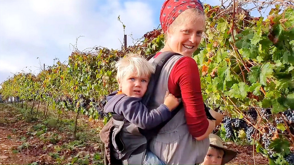 Illustration: Mother and Children Harvesting Grapes, Screenshot (Boomerang's YouTube Weekly J&S Report 01:23)