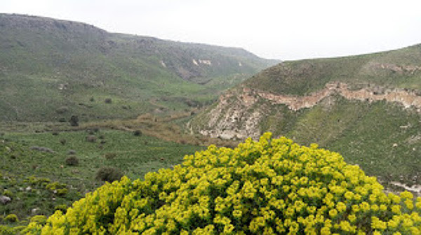 Purim Flowers (Image Credit: Icrat Lynn)
