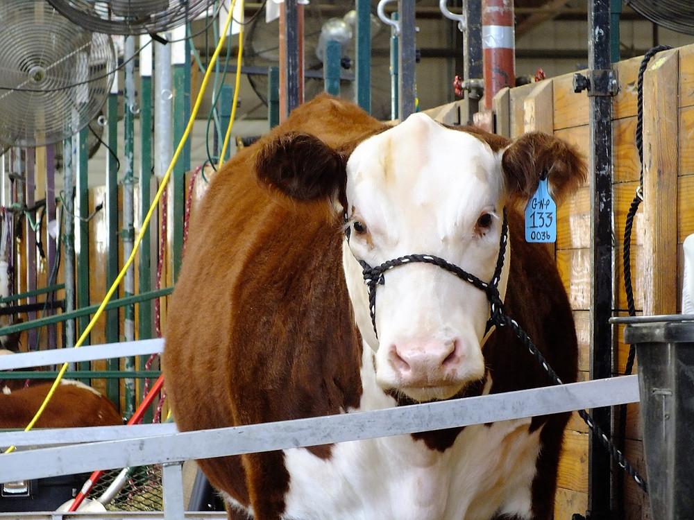 Dairy Farm by minx267 [CC0] via Pixabay.