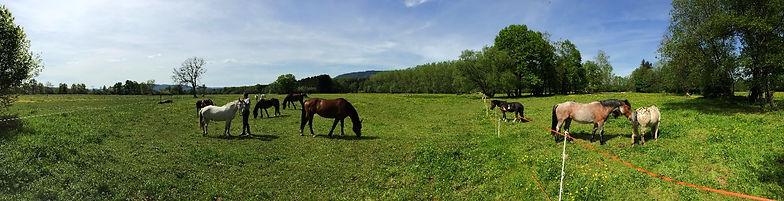 Herbages, nature, centre équestre, Vosges, Saint-Dié, 88, chevaux, poney