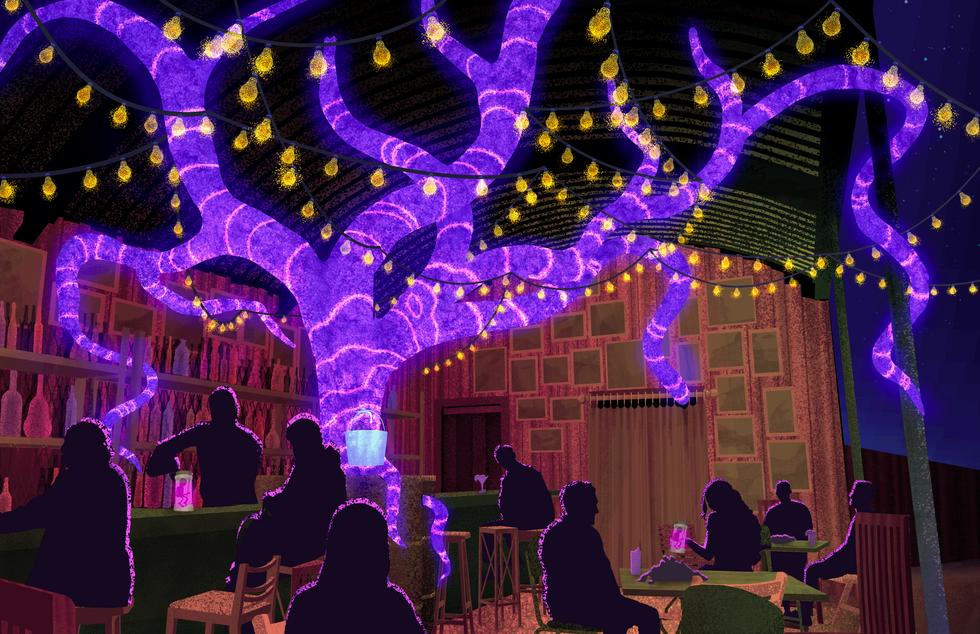 Darwin's Bar