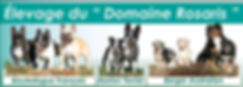 Bouledogue Français, berger australien, boston terrier, du domaine rosaris