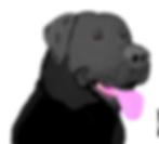 black lab_edited.png