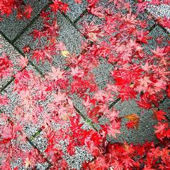 Red Leaves, Tokyo