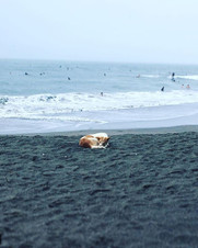 Sleeping dog on a rainy beach, Bali