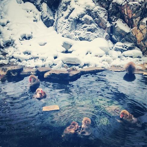 Snow Monkeys, Japan