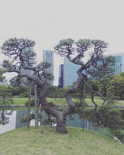 Hama Rikyu Gardens, Ginza, Tokyo.jpg