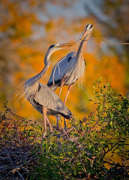 DG_Rookery Bay Birds.jpg