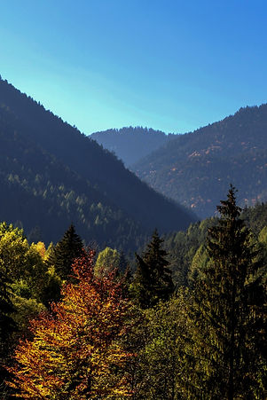 Trees%2520and%2520Mountains_edited_edite