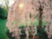 CherryTree_01.jpg