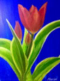 maripi tulips.jpeg