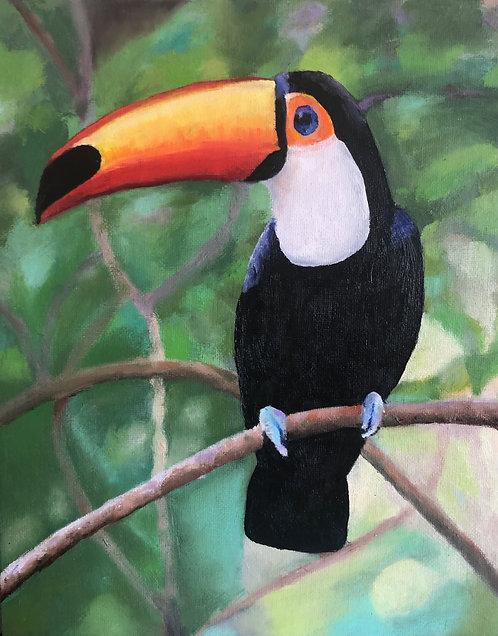 Toucan / Toco Tucano