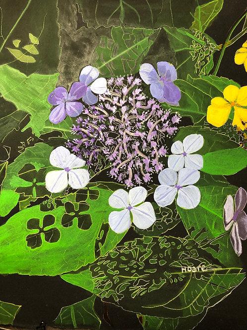 Blossoming Hydrainga on Black Paper