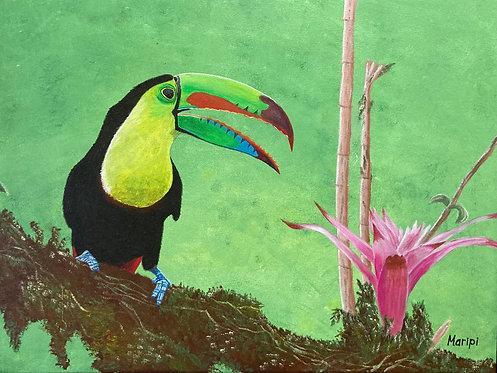 Costa Rican Keel-Billed Toucan