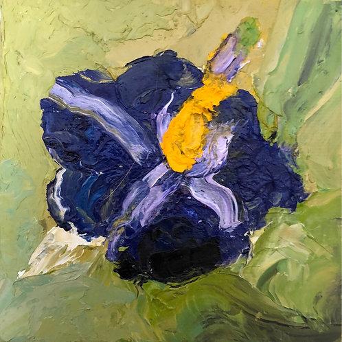 Maned Wolf's Flower / Flor da Lobeira