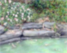 Surles-Azalea_Pond.jpg