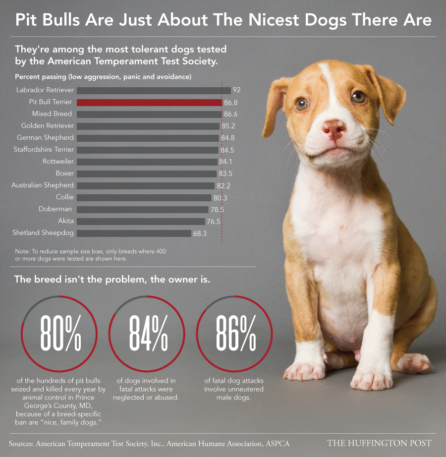 """""""Pit Bulls"""" Are One of The Nicest Breeds"""
