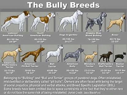 BullyBreedGraphic.jpg