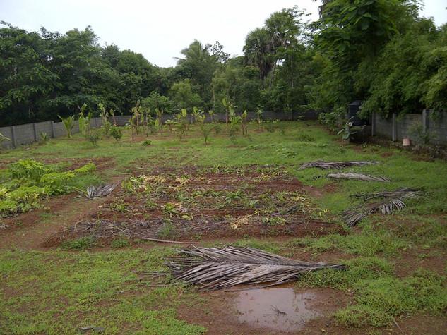 monsoon 2013.jpg