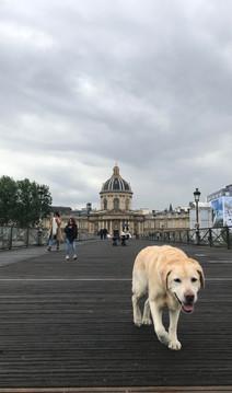 dog in paris.jpg