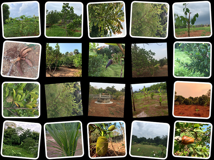 farm new.jpg