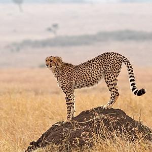Masai Mara 2013