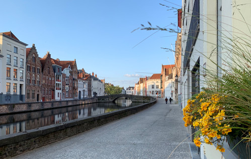 bruges street with yellow flower.jpg