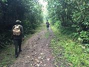 enroute to gorilla trek bwindi.JPG