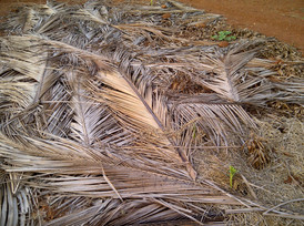 coconut leaf mulching.jpg