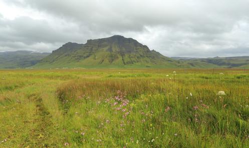 mountain and grass.jpg