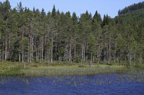 IMG_1397_Sweden.jpg