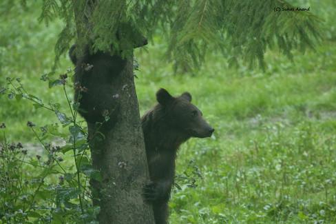tree hugging bear.jpg
