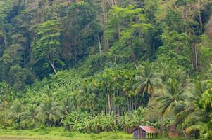Deep rainforest in Andaman