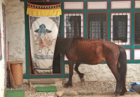 horse visitor.jpg
