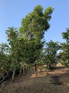 Tree lines 2020 start