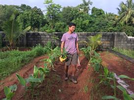 planting 2017
