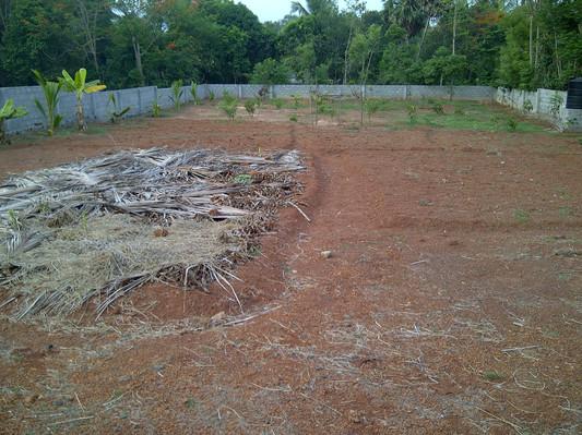 phase 1 tree planting 2012.jpg