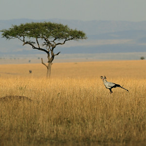 Masai Mara 2017