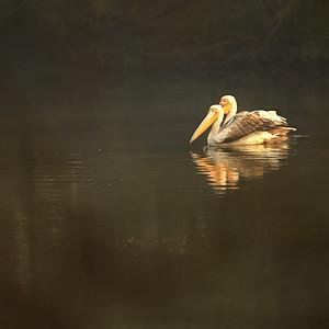 KGNP, Bharatpur Bird park